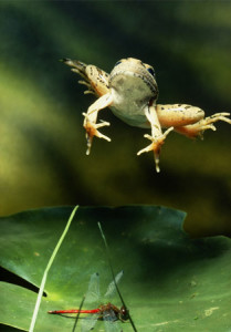 jumping-frog-110310-ga